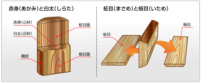 akami-illust
